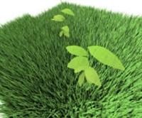 Vücuttan Su Atan Ödem Çözücü Bitkiler