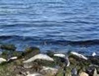 Efsanelere Konu Olmuş Tatil Yeri: Bafa Gölü