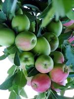 Yeşil Elma Sirkesi - Mucizenin Adı