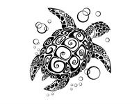 Su Kaplumbağası Ve Bakımı !
