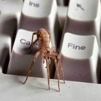 Arama Motoru Örümcekleri