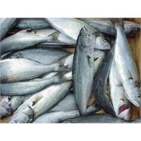 Balık Pişirmenin İncelikleri