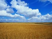 İstanbul Büyüklüğünde Tarım Alanını Yitirdik