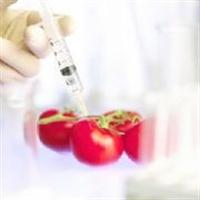 Gdo lu Gıdalar Ve Sağlık Riskleri Neler?