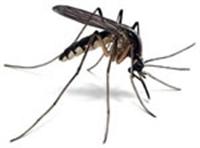 Sivrisinekler Neden Bazılarını Isırmaz?