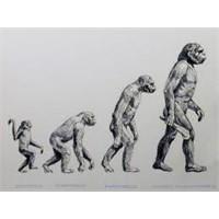 Karışık Bitkisel Çaylı Evrim Teorsi