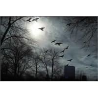 Kuşlar Manyetik Alanı Görüyor Olabilir
