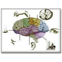 Beynin Çalişma Mekanizmasi