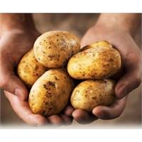 Tübitak İle Yerli Patates Çeşitleri Geliştiriliyor