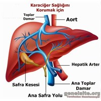 Karaciğeri Korumak İçin Sağlık Önerileri