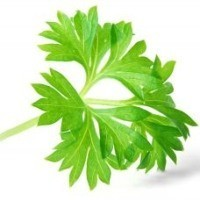 Kadın Sağlığının Yeşil Dostu: Maydanoz!