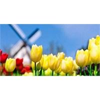 Sana Sarı Laler Aldım Çiçek Pazarı'ndan...