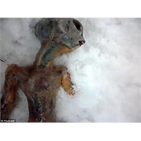 Uzaylı Cesedi Bulundu! Videolu
