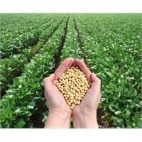 Tarım Yatırımlarına Yüzde 50 Hibe Desteği Geldi!