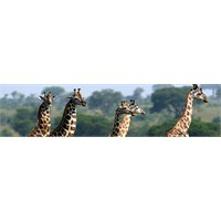 Zürafalarla Kahvaltı Yaptığınızı Düşünün !