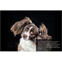 Silkelenen Köpekler, Kitap Olunca!