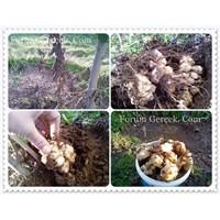 Yer Elması | Besin Değeri Ve Faydaları