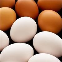 Kahverengi Ve Beyaz Yumurta Arasındaki Farklar ?