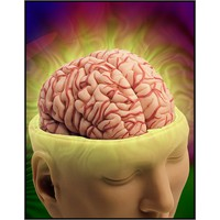 Beynimiz Hakkında Neler Biliyoruz ?
