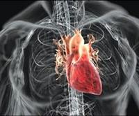 Kalp Krizinde Ölen Dokular İlk Kez Onarıldı