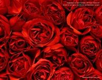 Güllerin İçinde Güzellik Yolculuğu Yapın