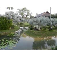 Merhaba Tayland - Sawasdee Thailand