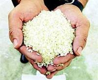 Beyaz Pirinçteki Tehlike