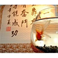 Dekorasyonda Su Ve Rüzgar: Feng Shui