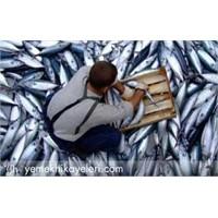 Balık Taze Mi Bayat Mı?