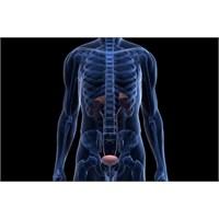 Testis Kanseri Nedir ? Belirtileri Nelerdir ?
