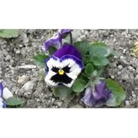 Sevdiğin Çiçeği Söyle, Kim Olduğunu Söyleyeyim!