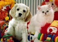 Kedi Köpek Barındıranların Dikkatine