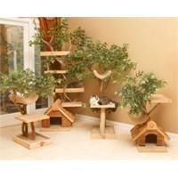Ağaç Üstünde Ahşap Kedi Evleri Projesi