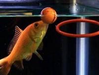 Balık Hafızası Efsane Çıktı