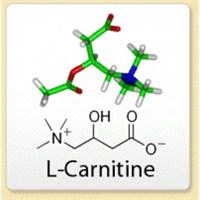 L Carnitine Nedir ? Yağ Yakma Sürecinde Kullanımı