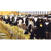 Hayvancılığa 5 Milyar Kredi İmkanı