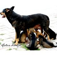 Sevgi Günü: Dünya Hayvanları Koruma Günü