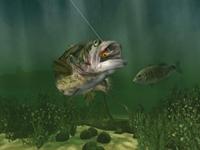 İlginç Balık Avı
