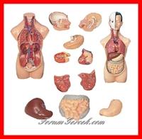 İnsan Vücudunun Parçalarının Değeri