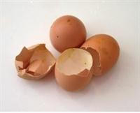 Kemik Erimesine Karşı Yumurta Kabuğu Kürü