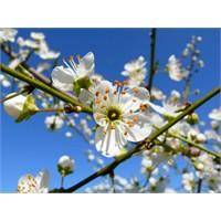 Baharın Müjdesi