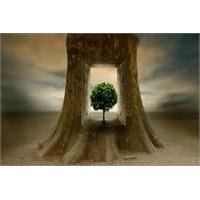 Bir Ağacın Gölgesinde