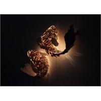 Frank Gehry'den Fish Aydınlatma Kolleksiyonu