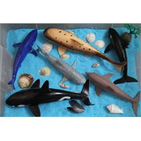 Duyusal Havuz-deniz Hayvanları