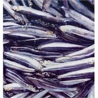 Hangi Balığı Ne Zaman Yemeliyiz
