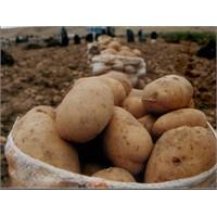 Patatesten İçme Suyu Nasil Elde Edilecek ?