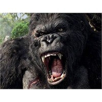 Bobiler Ekim 2012 En İyi Video Montesi 'king Kong'