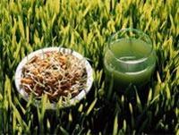 Yeşilin Kralı Kanser Düşmanı:çim Suyu