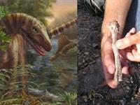 Dinozorların En Eski   akrabası   Bulundu