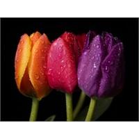 Çiçekler Ve Söyledikleri